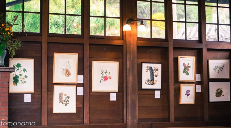 A side of the room with wooden walls (of Julia Morgan Hall) has framed botanical illustrations. Each one has a card with information about the subject of nature.